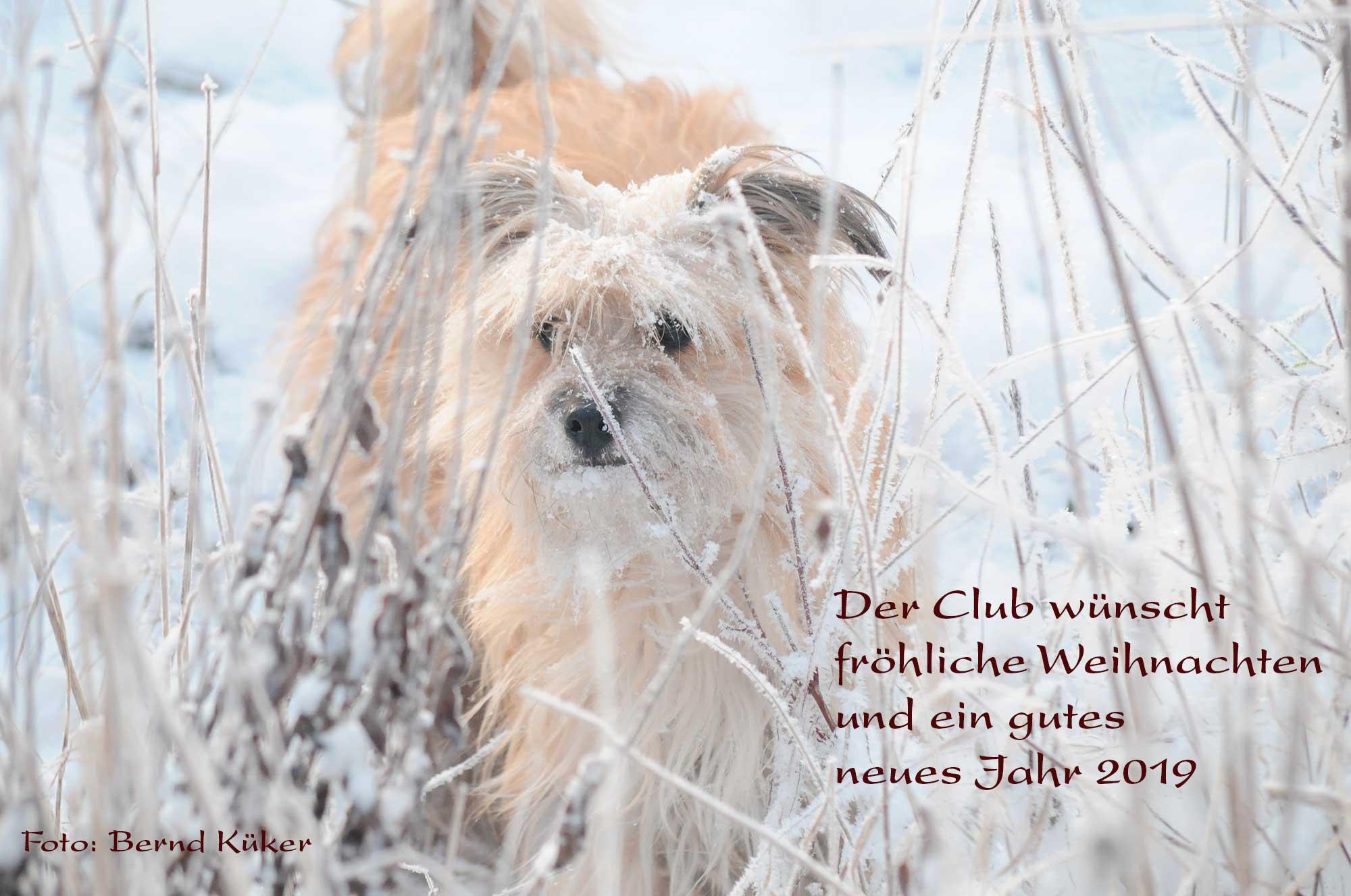 Der Club Berger des Pyrénées wünscht fröhliche Weihnachten