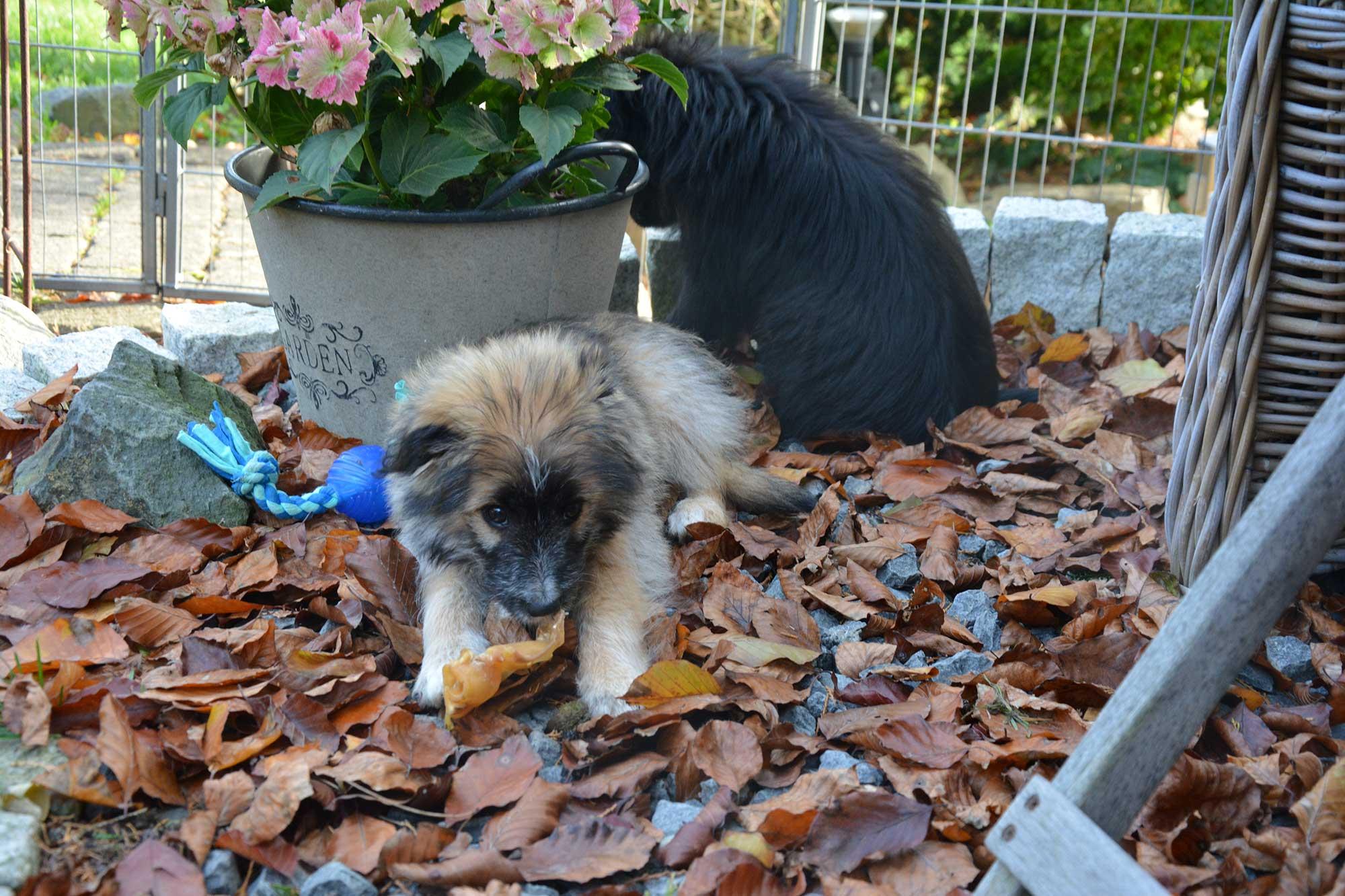 Die Herbst-Deko